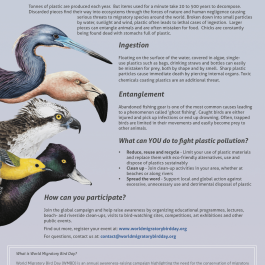 World Migratory Bird Flyer 2019