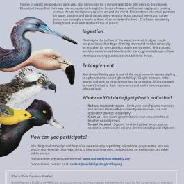World Migratory Bird Flyer 2019