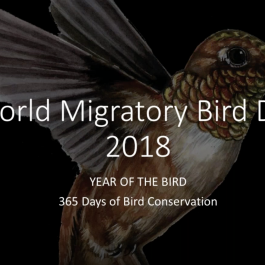 WMBD Webinar – Why Connect Through World Migratory Bird Day