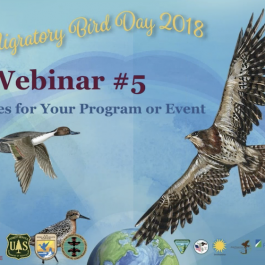 WMBD Webinar – Fun Activities For Your Program Or Event