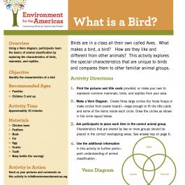 What's A Bird?