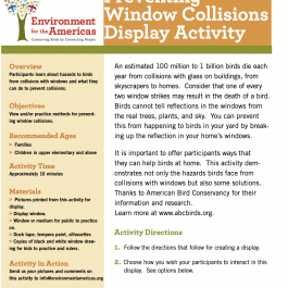 Preventing Window Collisions Display Activity