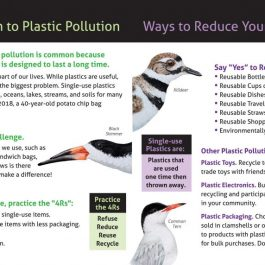 Plastic Pollution Pamphlet