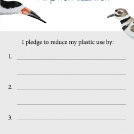 Plastic Pledge