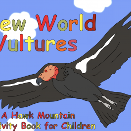 New World Vultures Activity Book