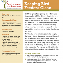Keeping Bird Feeders Clean