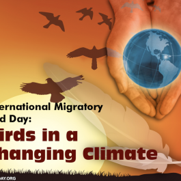 Birds In A Changing Climate