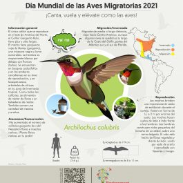 2021 Infographics Spanish