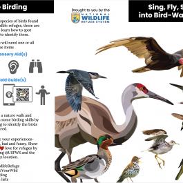 2021 Go Birding – Trifold Brochure
